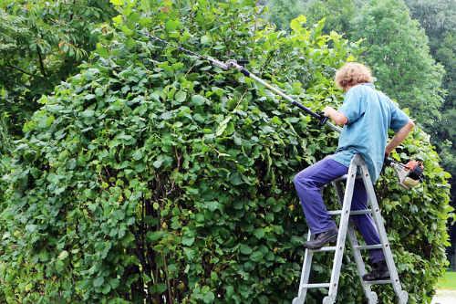 Ein professioneller Landschaftsgärtner kann bei der Pflege des Gartens helfen