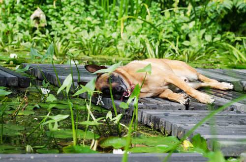 Relaxen im Garten geht immer