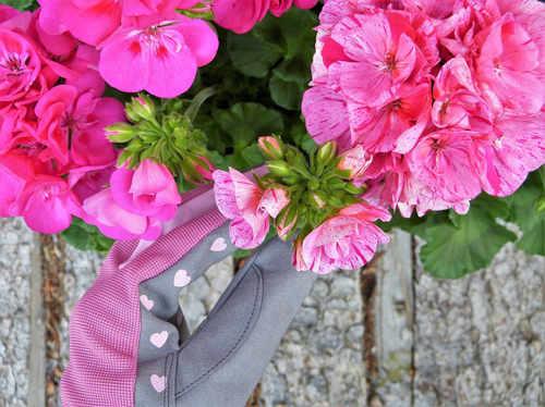 Die Rosenpflege kann vom Mieter übernommen werden - der Mietvertrag regelt die Gartenpflege