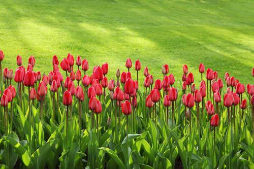 Rasen in Kombination mit Blumenbeeten sind besonders beliebt in Firmengärten