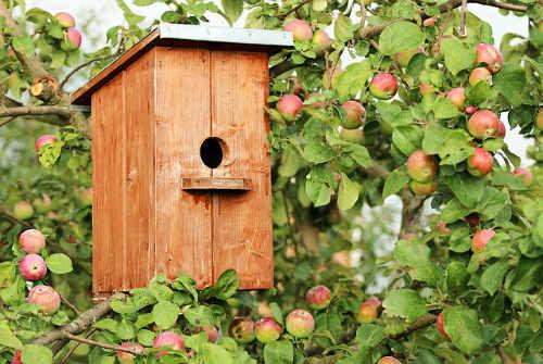 Ein Vogelhaus im Garten als Fütterungsstätte der Vögel für die kalte Jahreszeit