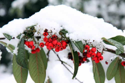 Der Garten im Winter - gute Vorbereitung auf die kalte Jahreszeit ist nötig