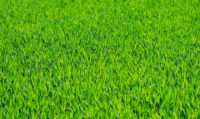 Richtige Rasenpflege für einen satten grünen Rasen